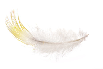 single feather with yellow edge isolated on white