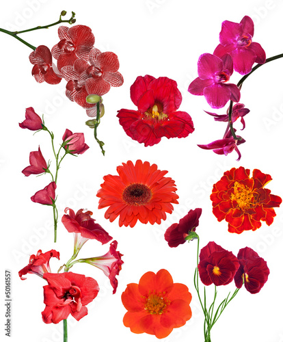 set of nine red color flowers isolated on white