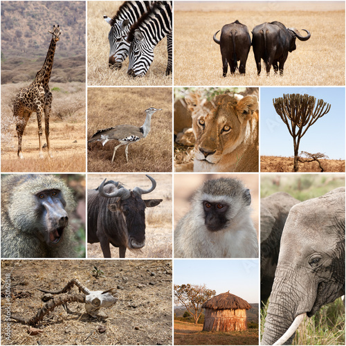 Fototapeten,afrika,afrikanisch,saeule,draußen