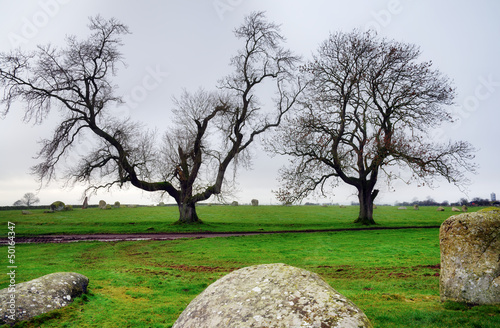 Two trees at Long Meg Stone Circle