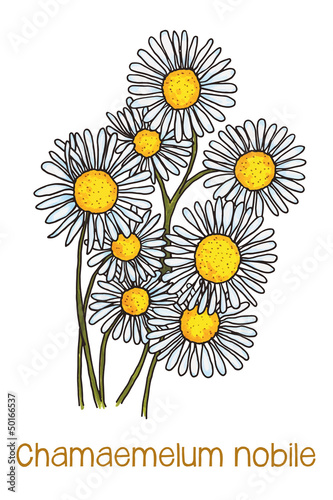 abstract illustration of camomile flowers