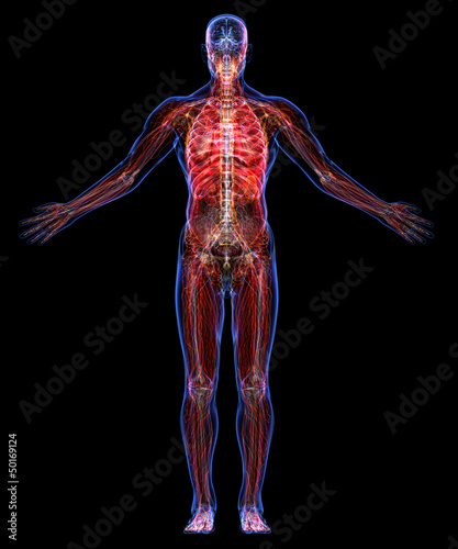 All human body systems