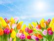 Pollenflug über der Blumenwiese