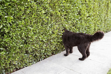 Dog peering into hedge