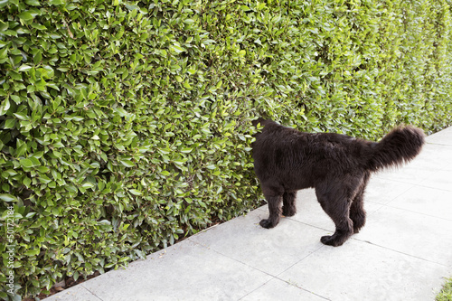 Dog peering into hedge