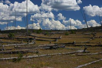 Fallen trees in field