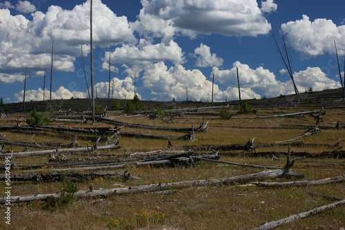 Fallen trees in field