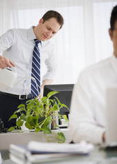 Caucasian businessman watering plant in office