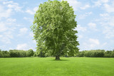 Tree growing in grassy field