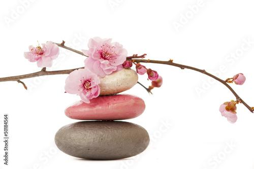fleur de printemps © Toanet