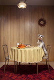 Miniature schnauzer standing on chair at table