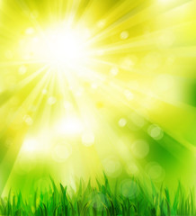 Sunny spring background with green grass.