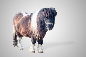 pony on gray background