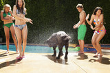Dog shaking water on girls near swimming pool