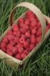 Fresh, red raspberries in basket