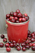 Bing cherries in bucket