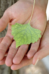 Caucasian woman holding small green leaf