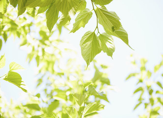 Green leaves on tree
