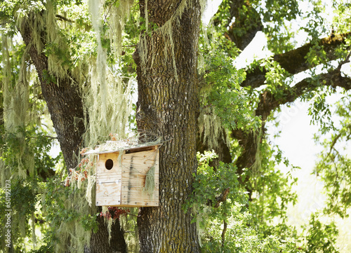 Bird house on moss covered tree