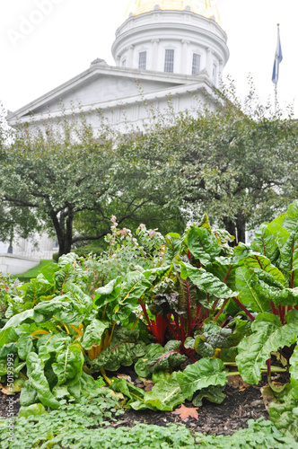 Swiss chard on the State House lawn
