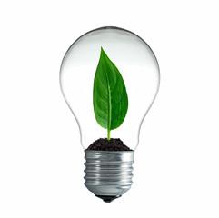Blatt wächst in einer Glühbirne