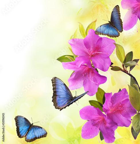 Obraz na Plexi fioritura di azalee con farfalle