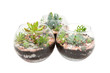 Three clear glass pots with plants