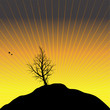Sunset with black tree silhouette