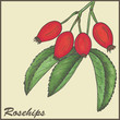 vintage background with Rosehips