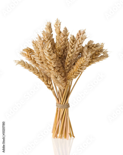 ears of wheat  isolated on white