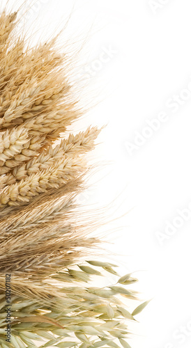 ripe ears of cereals isolated on white