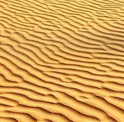 Sand and dunes of the Thar Desert.