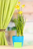 Beautiful yellow daffodils in flowerpot on window background