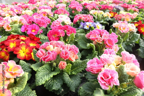 Fotobehang Purper Pflanzeit im Frühling