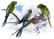 Macaw Parrots Perching