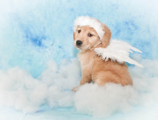 Sweet Angel Puppy