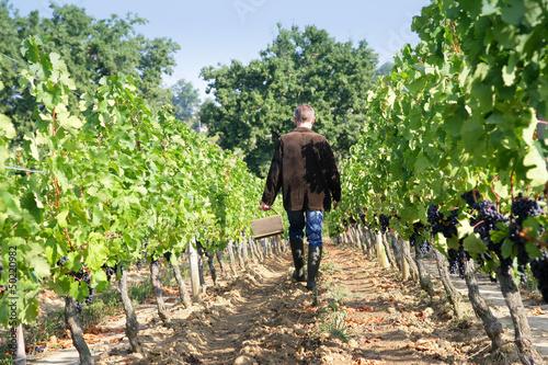 man walking in the vineyards