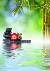 Pietre Zen, rosa e bambù in acqua