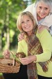 two seniors women gathering chestnuts poster