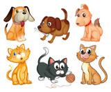 Lovable pets