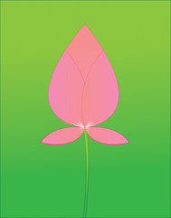 Pink lotus boom on a green background.