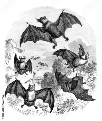 Bats - Chauve-Souris - Fledermaus