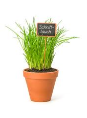Schnittlauch im Tontopf mit Pflanzenstecker