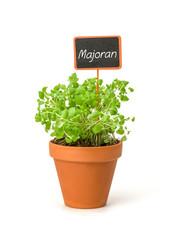Majoran im Tontopf mit Pflanzenstecker