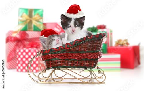 Cute Kittens in a Christmas Santa Sleigh