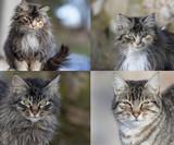 Gatos callejeros. poster
