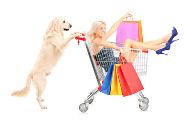White retriever dog pushing a woman with shopping bags in a cart