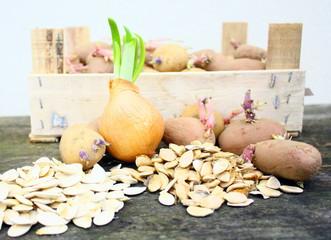 plants et graines pour plantation