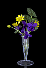 Celandines and violets - spring flowers in vase over black