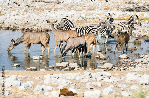 Wildlife at a waterhole in Etosha National Park, Namibia